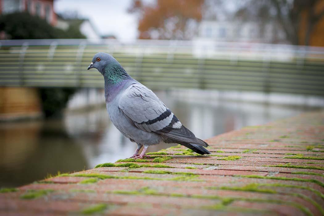کلینیک پرندگان شیراز